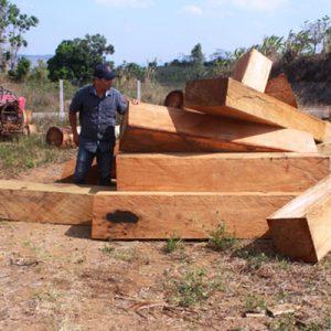 Nhận Xét Về Những đặc Tính Của Gỗ Lim Nam Phi Trong Làm đồ Thờ